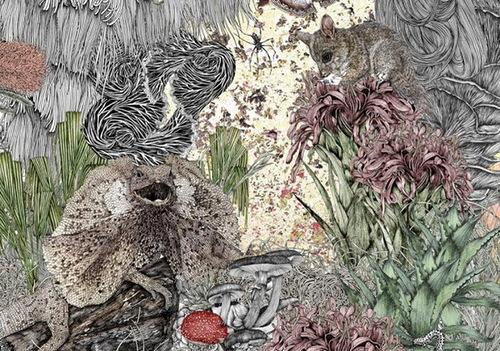 Wildlife Illustration by Australian artist Victoria Garcia
