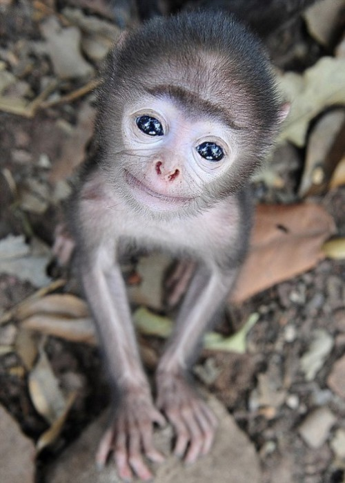 The world's cutest baby monkey, photo by Russian amateur photographer Nikolay Sotskov