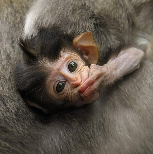 The world's cutest baby monkey