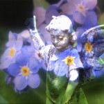 Forget-me-not inspiration