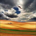 An eagle flying over the field. Work by Katarina Stefanovich, talented nature photographer from Belgrade, Serbia