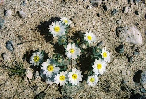 Anza-Borrego Desert in California
