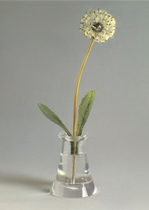 Fine Flower 'Dandelion' - a symbol of impermanence of life