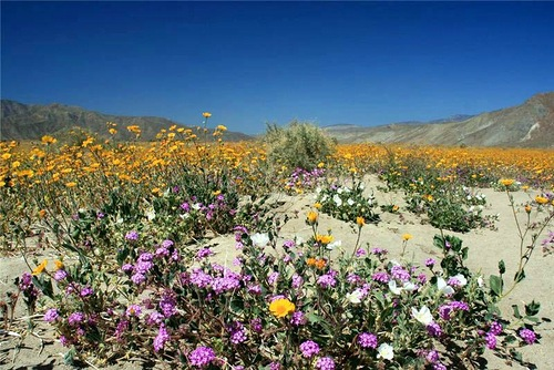 Anza-Borrego Desert in California