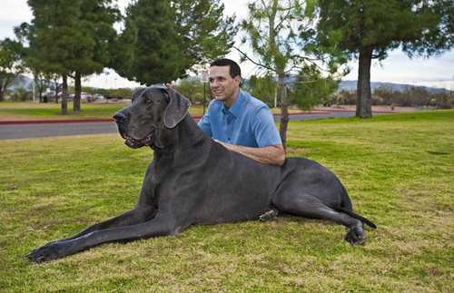 The tallest dog ever according to the Guinness World Records