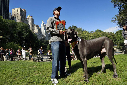 Giant George – the world's tallest living dog, and the tallest dog ever according to the Guinness World Records