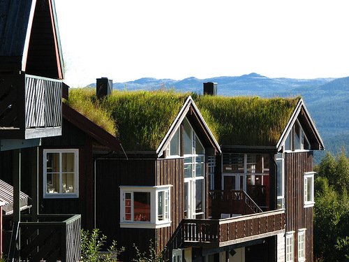 Grass roofs in Norway