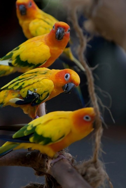 Facts about parrots