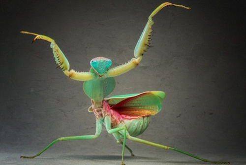 Fascinating Research Photos. Praying mantis. Photo by Igor Siwanowicz