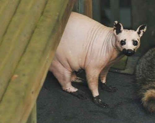 Guess what kind of animal it is