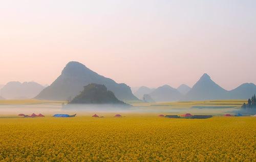 Morning mist over the rape field