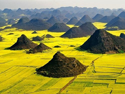 Oilseed rape fields, China