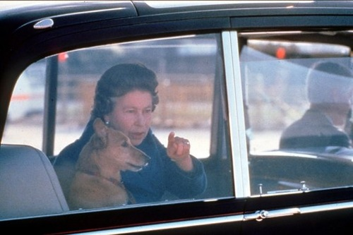 Since 1933, when her father brought home a pair of Welsh corgis—Dookie and Jane—the queen has had a very public love affair with her dogs