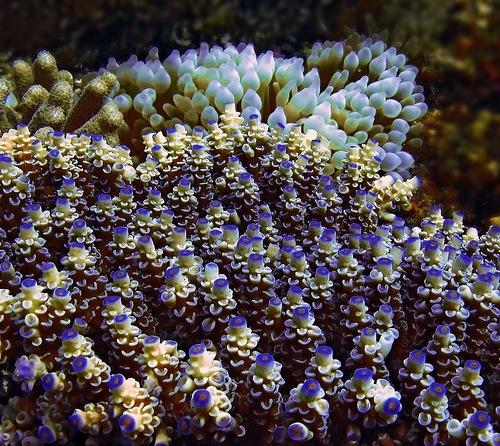 Gorgeous underwater garden of corals