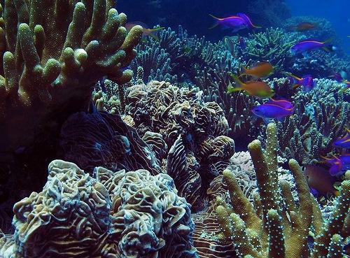 Red Sea, Egypt underwater garden of corals