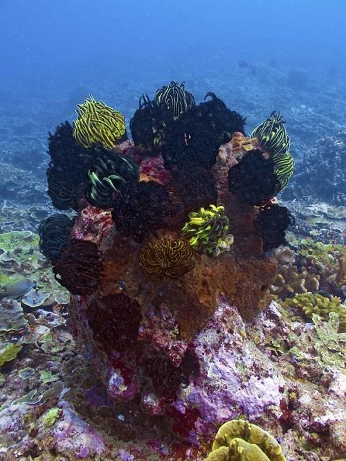 Amazing bouquet of marine flowers