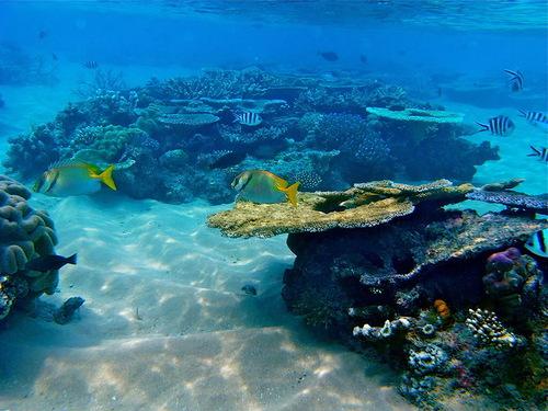 Australian Barrier Reef