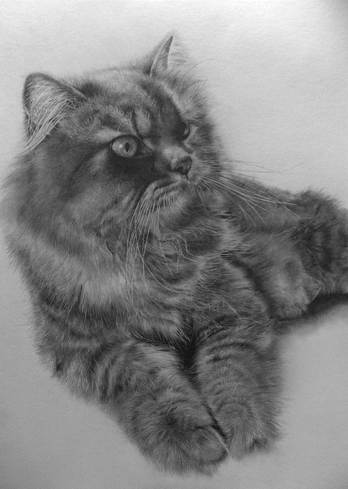 Hyperrealistic pencil drawings by Chinese self-taught artist Paul Lung