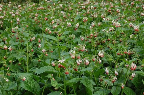 Alnwik poisonous garden in Northumberland, England