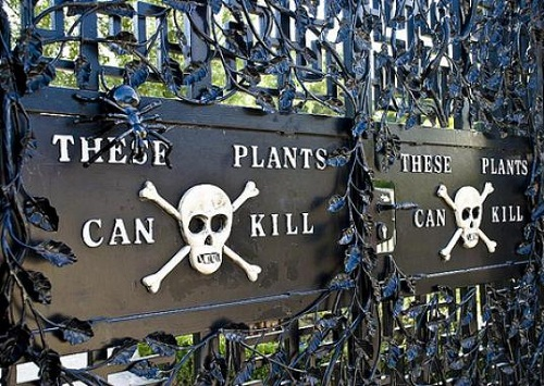 Garden of poisonous plants. Behind the large black gates of the garden grows about 100 varieties of drugs prohibited by law.
