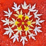 Maple leaf mandala