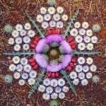 Floral Mandala by Kathy Klein