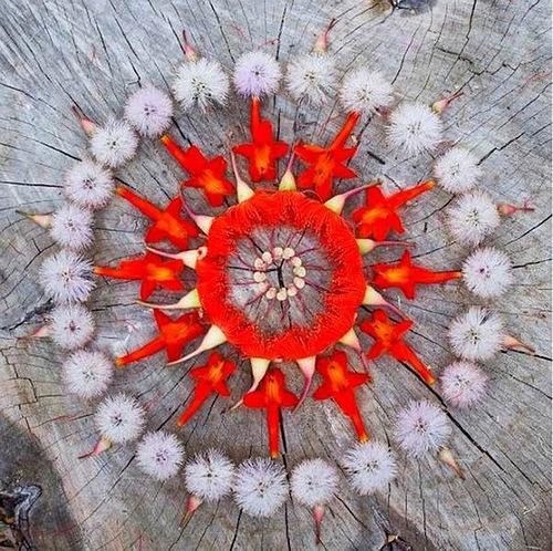 Beautiful Flower mandala by Kathy Klein
