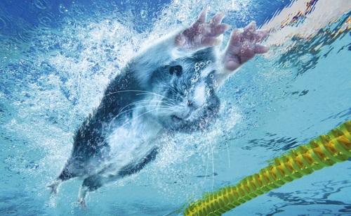 May – Swimming