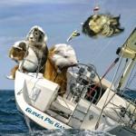 Sailing at the Summer Olympics