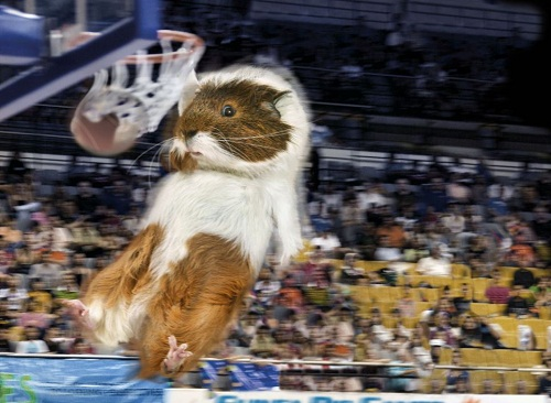 Guinea Pig Games - Going for Gold