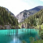 Spruce trees that rise above the water's surface from the bottom of the lake Kaindy - the most mysterious and beautiful lake in Kazakhstan