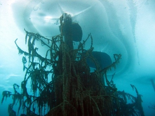 trunks of submerged Schrenk's Spruce trees that rise above the water's surface from the bottom of the lake Kaindy - the most mysterious and beautiful lake in Kazakhstan