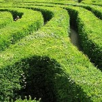 Longleat Maze longest hedge maze in the world