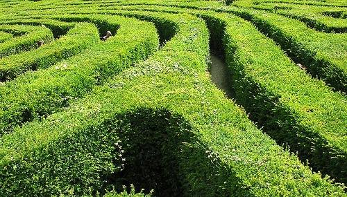 Longleat Maze longest hedge maze in the world
