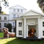Proud dogs enjoy their Luxury dog house