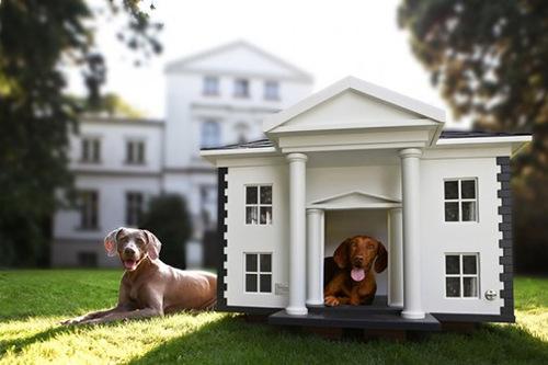 Proud dogs enjoy their Luxury dog house