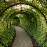 Tunnel of poisonous plant