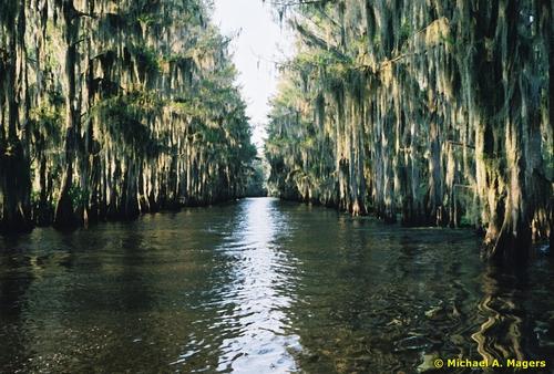Located in Texas and Louisiana Caddo Lake