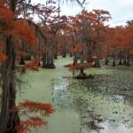 Wetland of International Importance - Caddo Lake, Texas and Louisiana