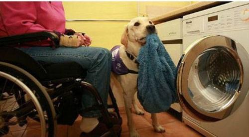 Washing linen labrador Byron