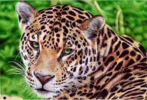 Leopard. Photo realistic drawing by Portuguese artist Samuel Silva