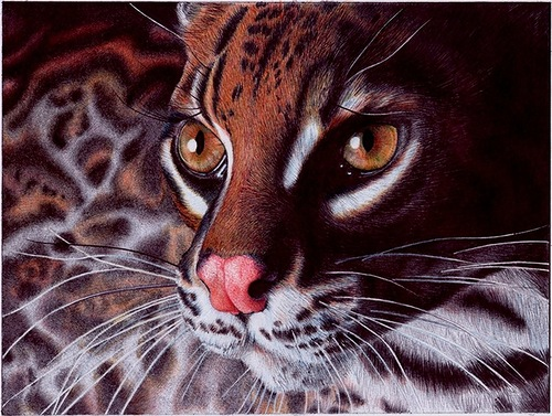 Realistic animal portraits by Cristina Penescu