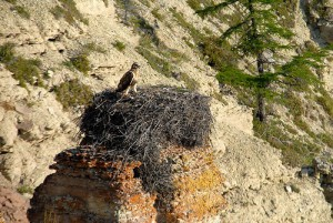 Bird's nest in the mountains