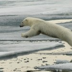 Russian Arctic - Journey to the eightieth parallel