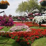 Beautiful Al Ain Paradise flower park in Arab Emirates
