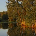 July. Landscape by photographer Aleksandr Danilin