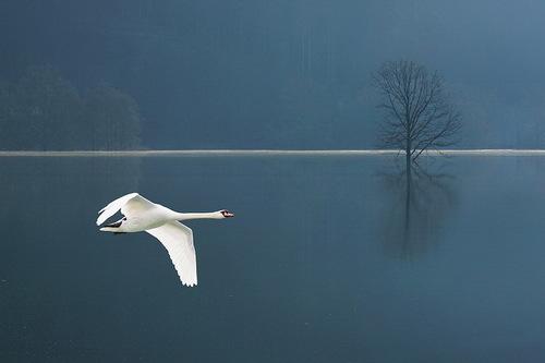 Beautiful wildlife by nature photographer Tomaz Benedicic