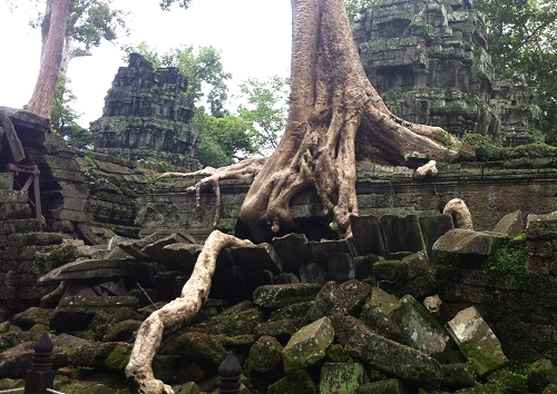 Powerful tree roots