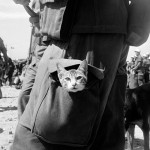 Cats at the World Wars
