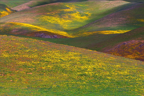 California Wildflowers by photographer Kevin McNeal